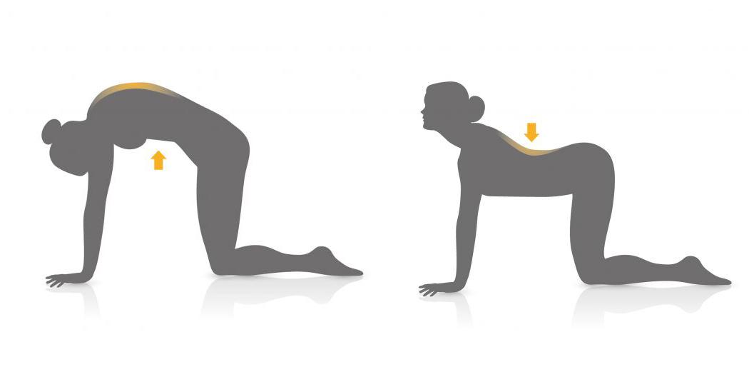 stretchyback